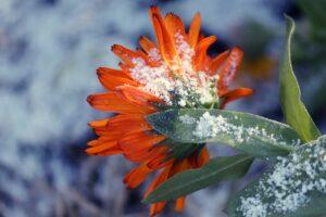 IL FREDDO E' ARRIVATO! E' tempo di proteggere le nostre piante!