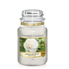 Yankee Caldle Camelia Blossom Giara Grande
