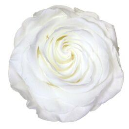Rosa Stabilizzata Premium Bianca Diam. 8 cm  Confezione 4 pz