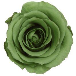 Rosa Stabilizzata Green Tea h 5,5 cm Confezione 6 pezzi