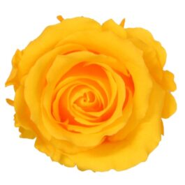 Rosa Stabilizzata Giallo h 5,5 cm Confezione 6 pezzi