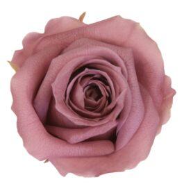 Rosa Stabilizzata Rosa Antico h 5,5 cm Confezione 6 pezzi