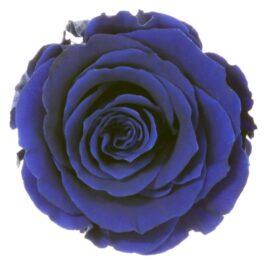 Rosa Stabilizzata Blu h 5,5 cm Confezione 6 pezzi