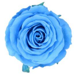 Rosa Stabilizzata Celeste h 5,5 cm Confezione 6 pezzi