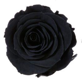 Rosa Stabilizzata Nera h 5,5 cm Confezione 6 pezzi
