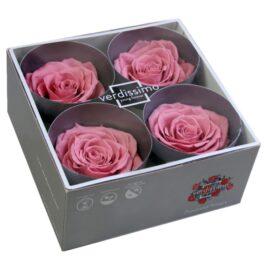 Rosa Stabilizzata PREMIUM Rosa antico Diam. 8 cm  Confezione 4 pz