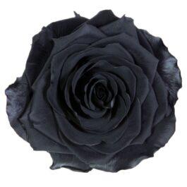 Rosa Stabilizzata PREMIUM Nera Diam. 8 cm  Confezione 4 pz